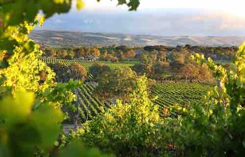 McLaren Vale in South Australia
